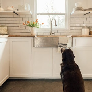 Dog looking at crafted stainless steel sink