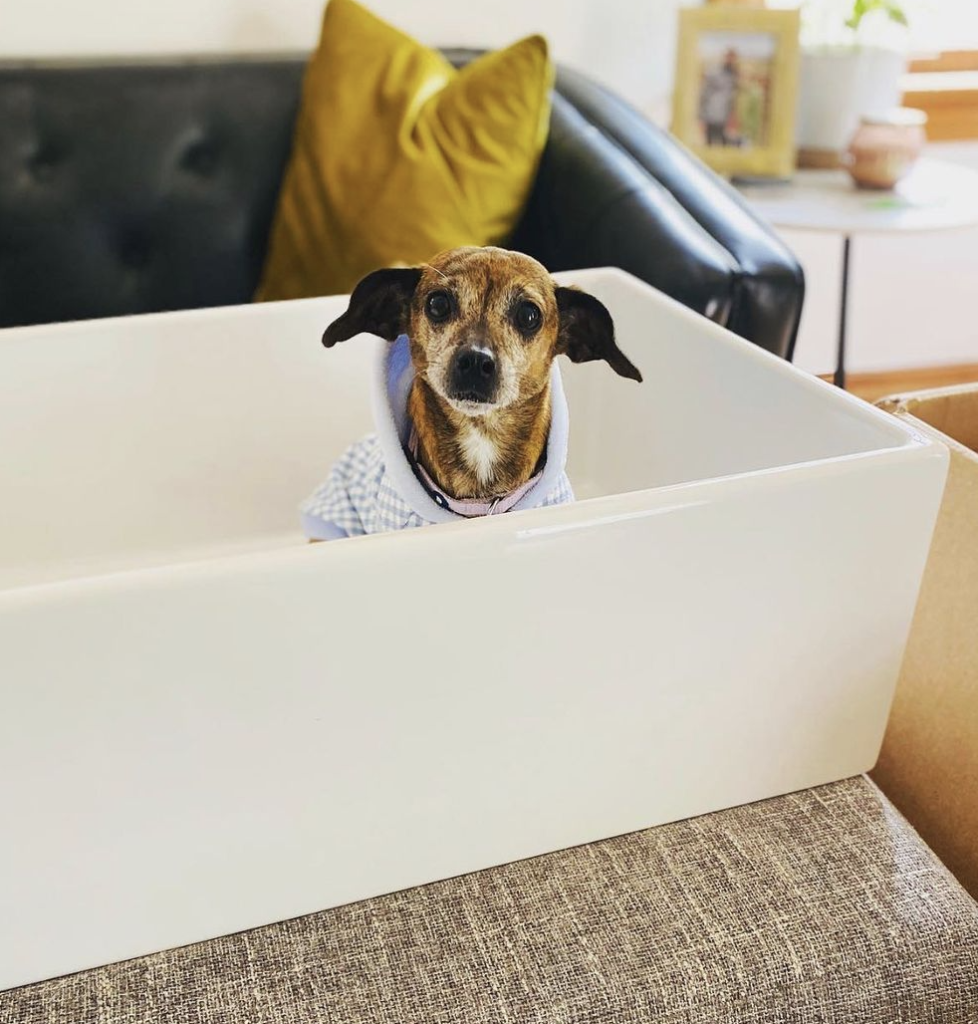 Small dog in fireclay sink