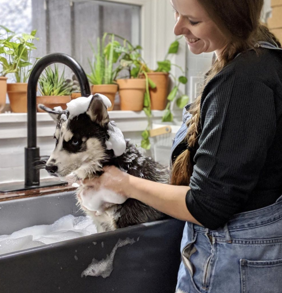 dog being washed in sink